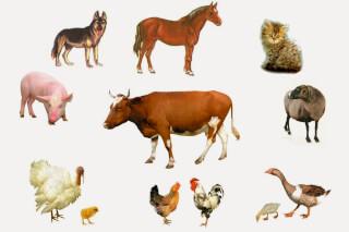 Пальчиковая гимнастика на тему «Домашние животные»
